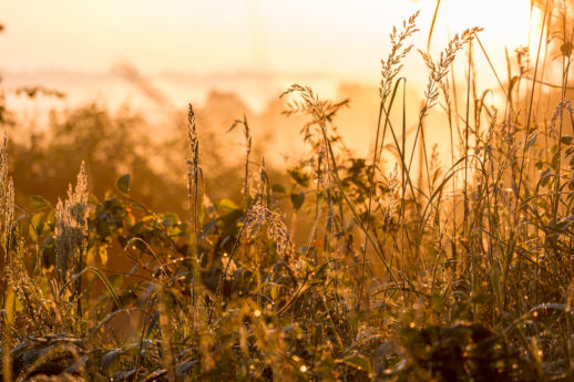 Gras im ersten Licht des Tages