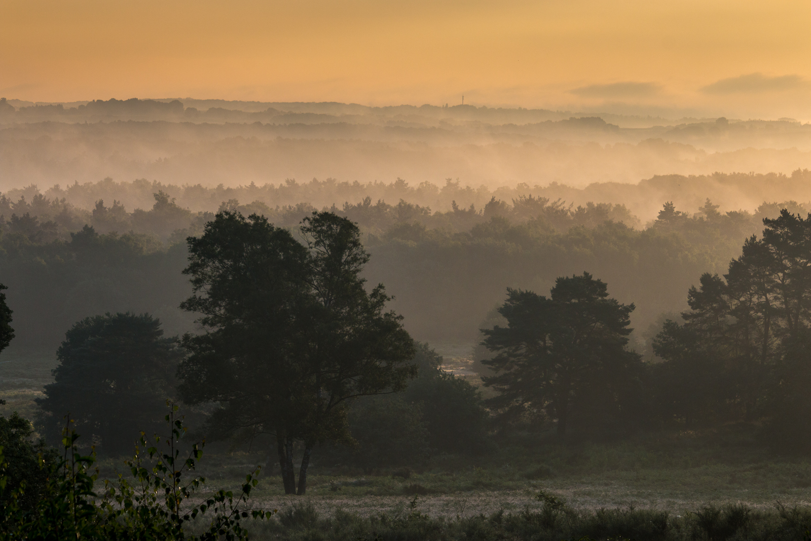 Nebelschwaden über der Wahner Heide