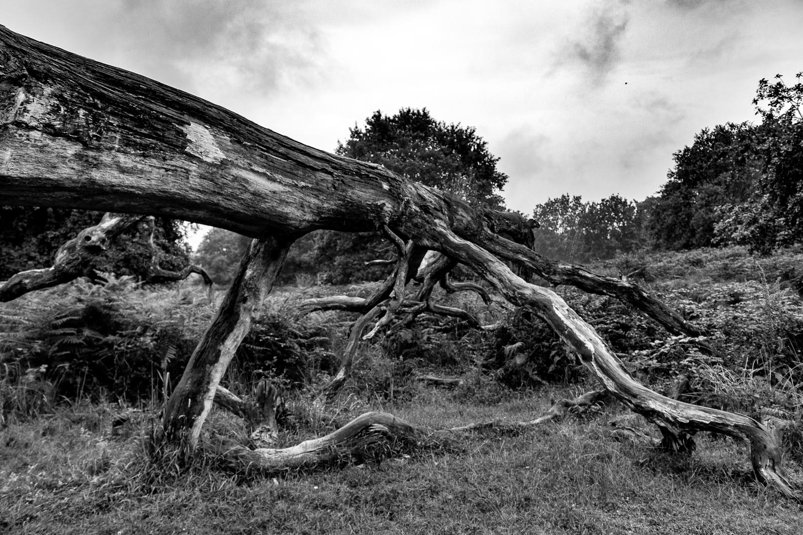 Toter Baum am Güldenberg